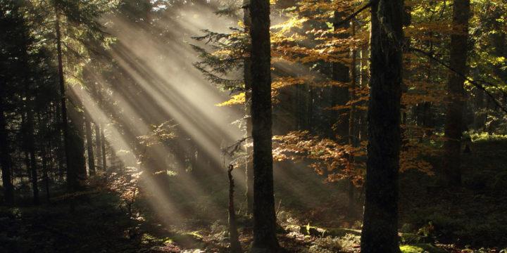Découverte de la forêt