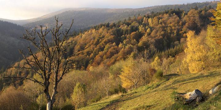 Séjour : Retrouver la nature en famille